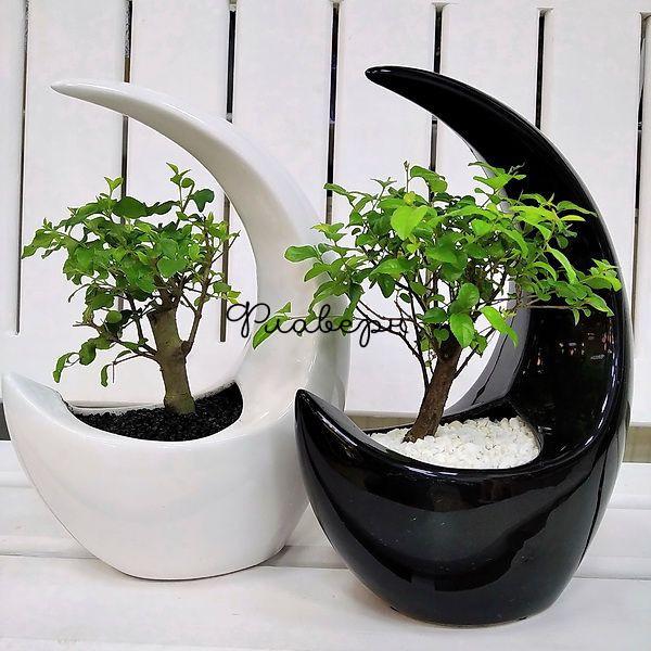 Бонсай в керамике в форме луны фото