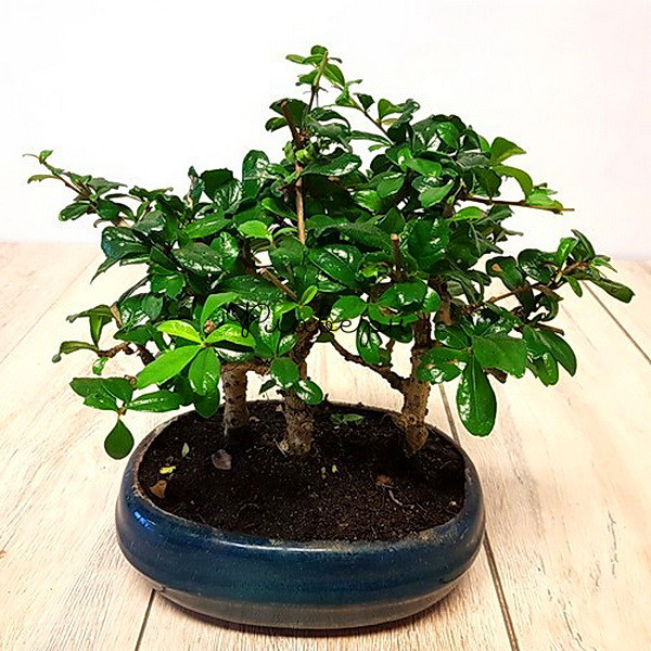 Бонсай лес в керамике фото