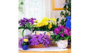 Декоративно - цветущие растения