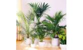 Пальмы и Юкки