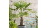 Разные пальмы