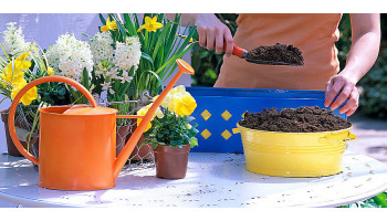 5 ошибок при пересадке растений