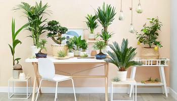 Обзор комнатных растений