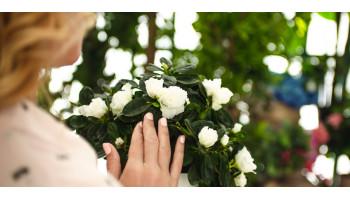 Что лучше? Подарить букет цветов или комнатное растение?